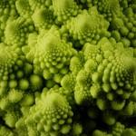 Broccoli e crucifere