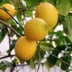 Tutte le mattine prima di fare colazione un limone spremuto in acqua.